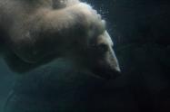 underwaterbear
